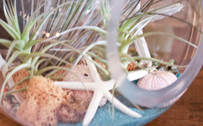 starfishplant