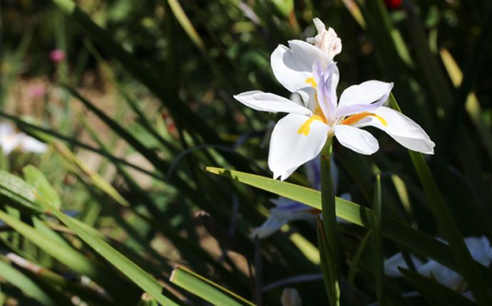 whiteflower-1