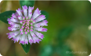 purpleflower